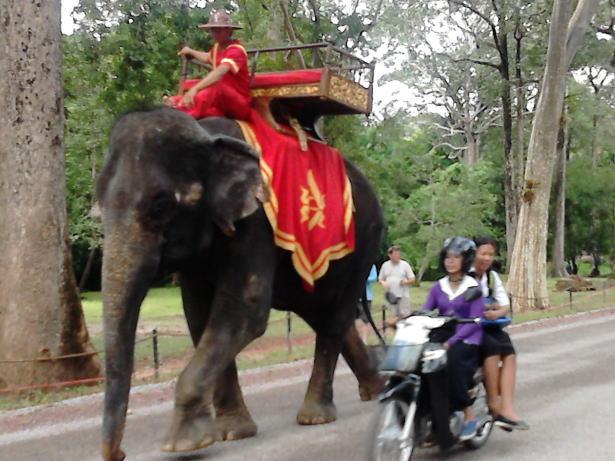 シェムリアップの象